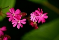 Les 10 plus belles fleurs du monde et pourquoi on les classe comme telles