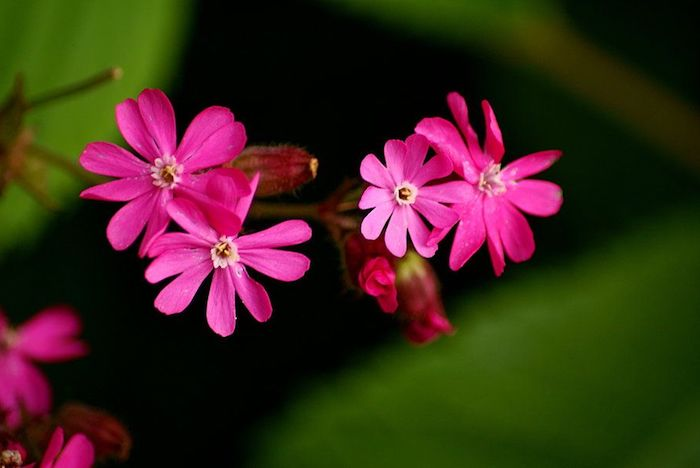 un représentant de les plus belles fleurs avec des petales fins roses dans une jungle
