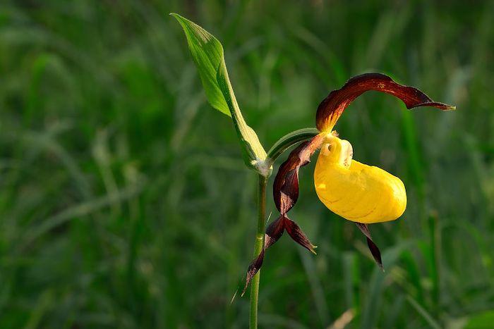 une fleure exotique en couleurs jaune et violet de la famille)des orchidées fleur rare
