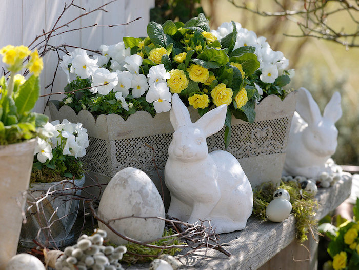 weifl gelbe osterdeko : blumenkasten mit viola cornuta (hornveilchen)