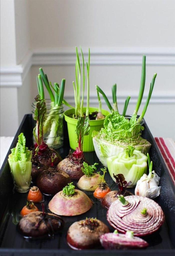 astuce jardinage potader des leumes coupés dans une plaque