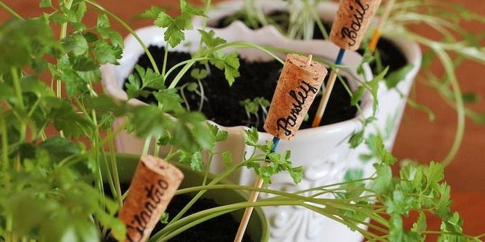 astuces de jardin pour es plantes a potages avec des bouchons de liège