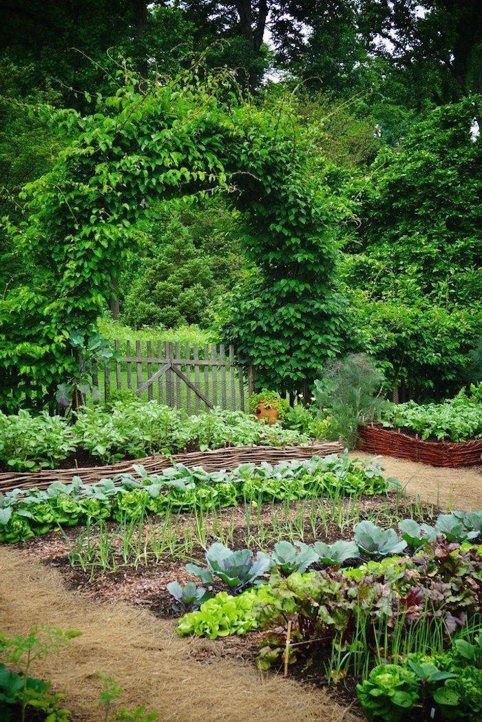 astuces de jardin pour les carrés de choux dans un cour avec des arbres vertes