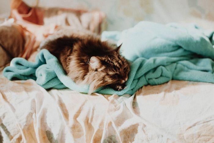 choix de race de chat d appartement idée animal pour petits espaces logements.jfif