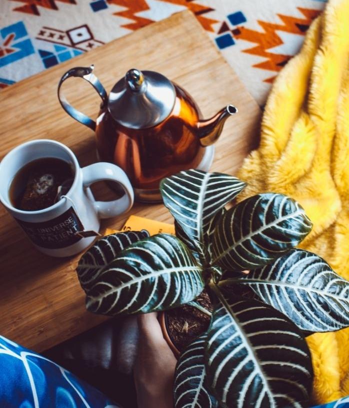 coffret cosy de plante verte plateau service plaid jaune bouilloire thé et tasse de thé, idée cadeau pour maman