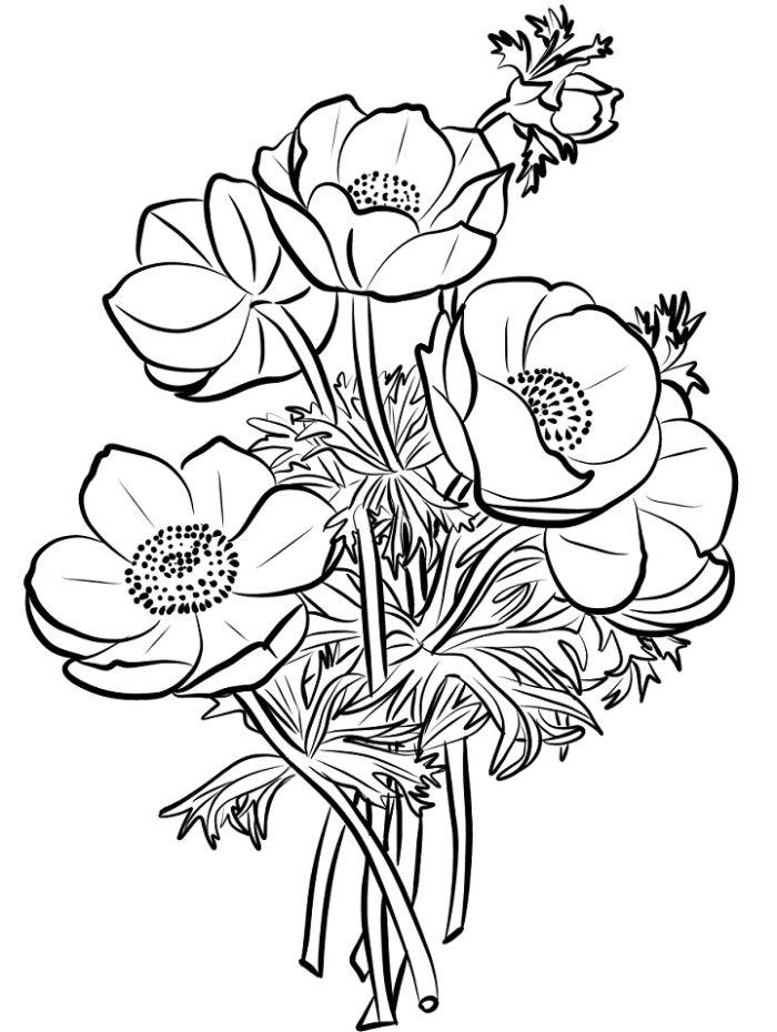 coquelicot dessin facile de tout un bouquet simple aux contours noirs sur feille blanche