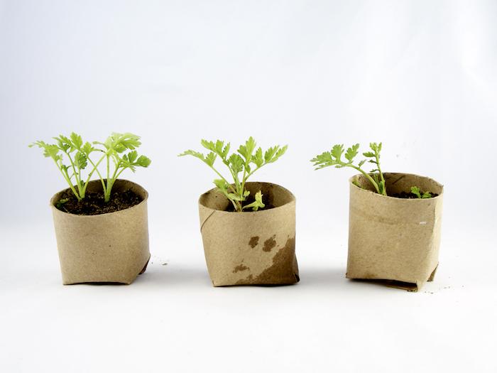 deco jardin recup des herbes plantes dansun pot de tube de papier de toilette