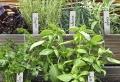7 astuces de jardin – des graines et les plantes jusqu'à la déco