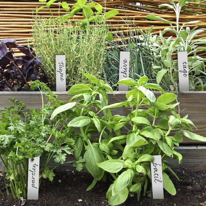 des herbes plantés dans le jardin avec des petites ecritaux avec des noms