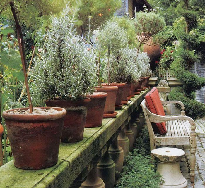 des pots a fleurs avec des herbes différents plantés idée deco veranda