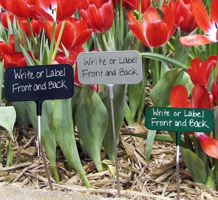 des tulipes rouges plantés dans le sol avec des écritaux pour les noms