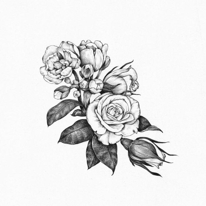 dessin rose réaliste une branche fleurie de roses ouvertes et fermées sur fond de couleur blanche