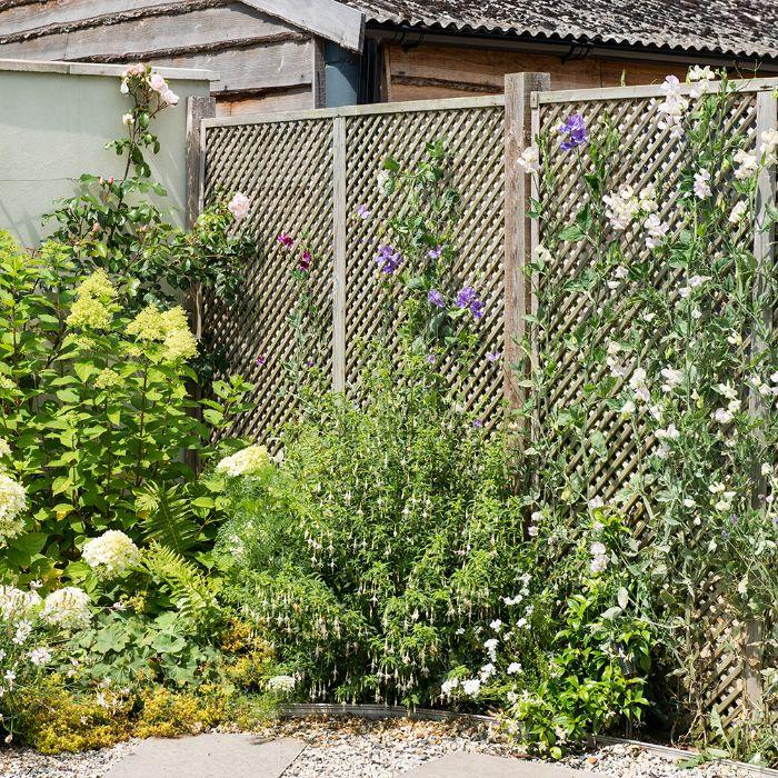 grillage boisé cloture naturelle avec des plantes rampantes bordure de jardin de plantes vertes
