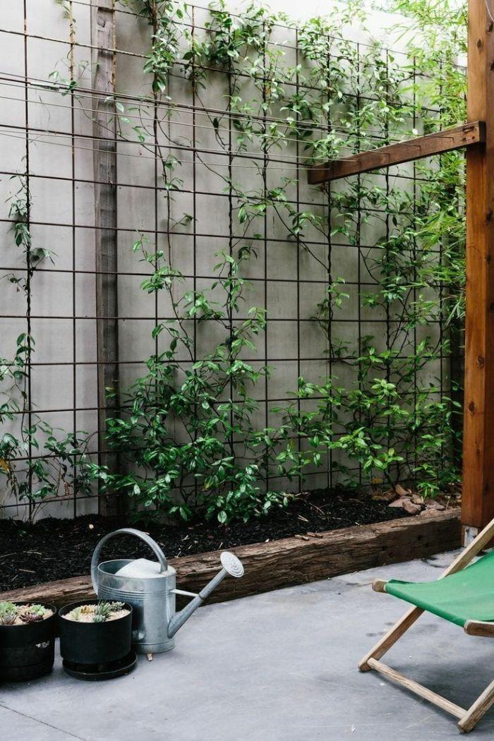 grille metallique avec lierre pour cloturer une cour de jardin modele amenagement exterieur simple