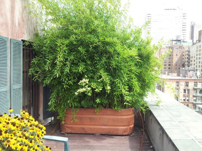 idee brise vue vegetalde grosse plante verte vuisson dans un bac à fleur pour séparer un balcon