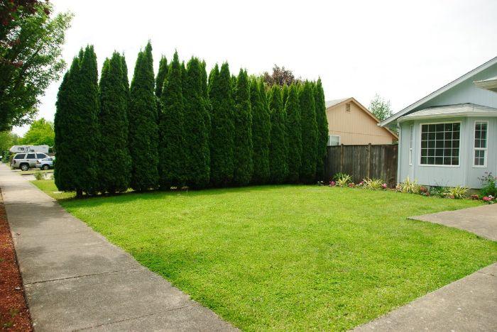 idee de brise vue vegetal en rangd arbres alignement au pour séparer gazon devant maison simplement
