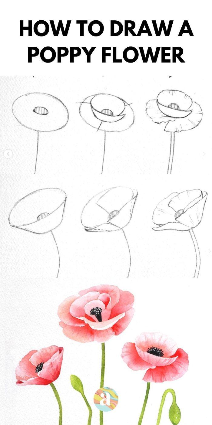 idee dessin coquelicot à faire étape par étape au crayon esquisse à colorier aux crayons en couleur