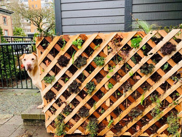 lit de végétaux construit avec des lattes en bois terreau et des plantes vertes variées exterieur vert