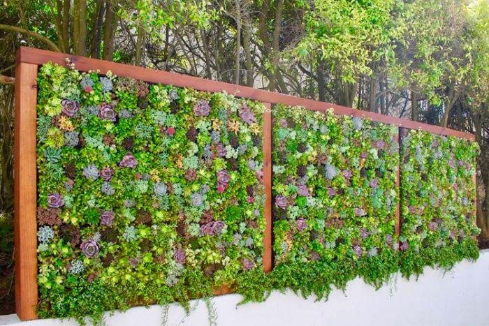 panneau vegetal de plantes succulentes variées comment amenager un jardin cour exotique