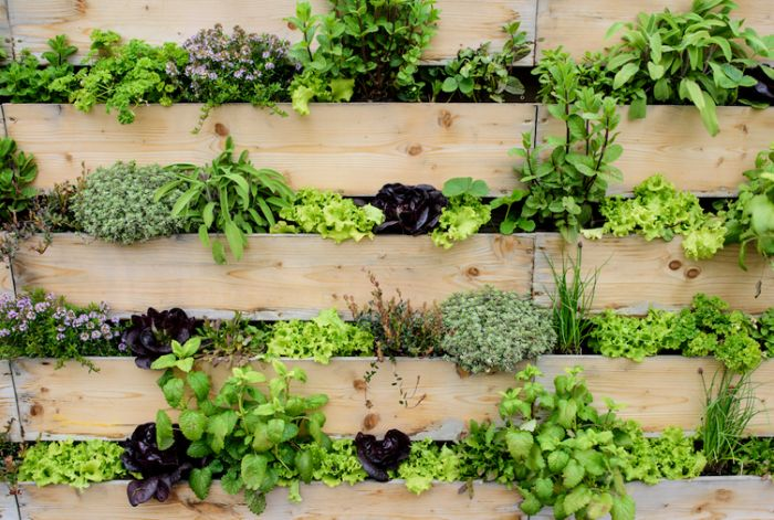 planches de bois blond avec des plantes en dessous herbes salades variées amenagement exterieur