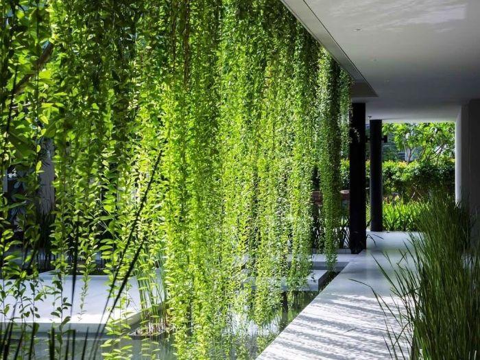 pluie de verdure plante verte retombante pour créer rideau végétal élégant dans la cour d une maison