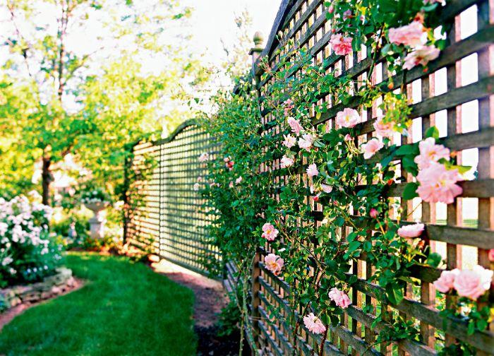 quel brise vue décoratif idée de treillis jardin cloture décorée de roses rampantes aux feuillages verts