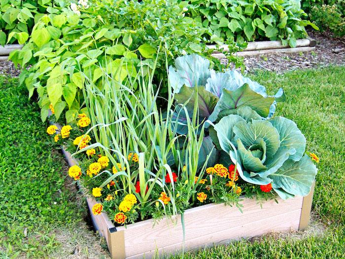 un carré de choux et des fleurs entouré des planches astuce deco jardin recup