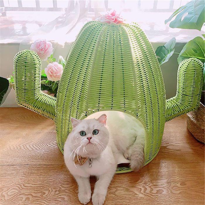 un chat blanche dans un une hutte verte en forme de cactus peinture pour meuble en rotin