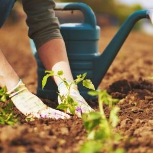 40 + astuces de jardin - des graines et les plantes jusqu'à la déco ou tout dont vous avez besoin