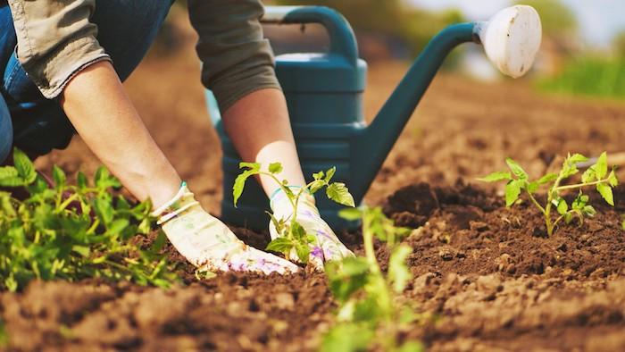 un homme avec des gants qui plante des plantes conseil jardinage