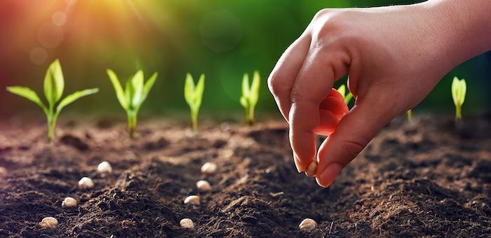 un main montre comments semer des graines dans le sol sou la lumière du soleil