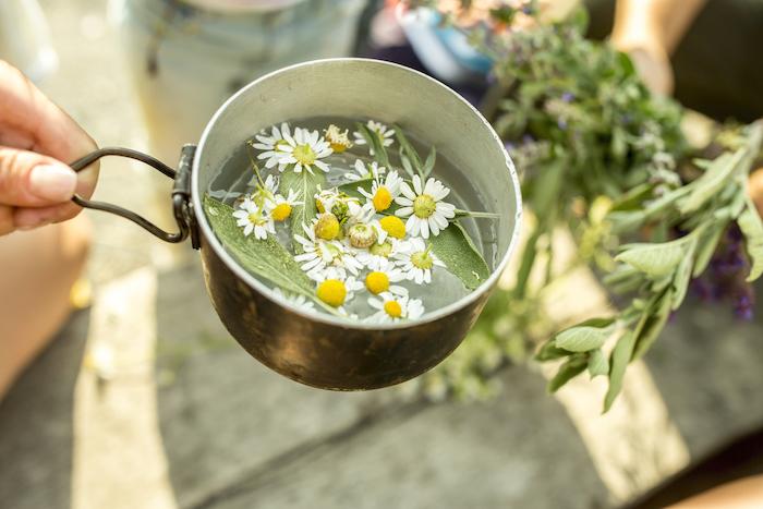 infusion thé camomille en pot, exemple astuce jardin simple