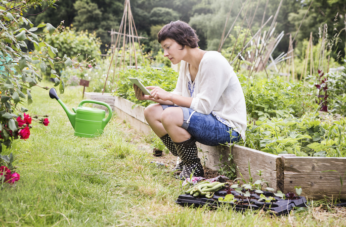 woman checking wireless tablet in allotment.