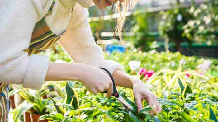 une femme qui pratique entretien du jardin et coupe les feuilles sec des fleurs avec ciseaux