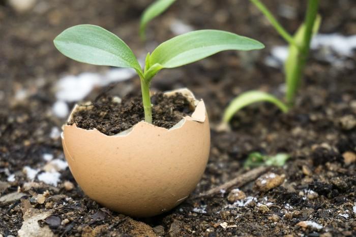 une plante verte qui pousse dans le coquillage d un oeuuf comment beau potager