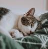 comment choisir sa couette confortable idée chat sur couette verte quelle taille grammage