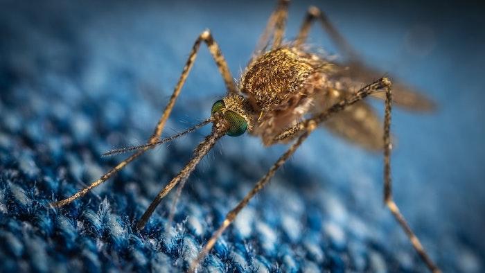 image zoom d un moustique sur une surfqce bleue en tissu