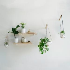 Déco murale avec plantes : top 10 idées tendance à piquer sans tarder