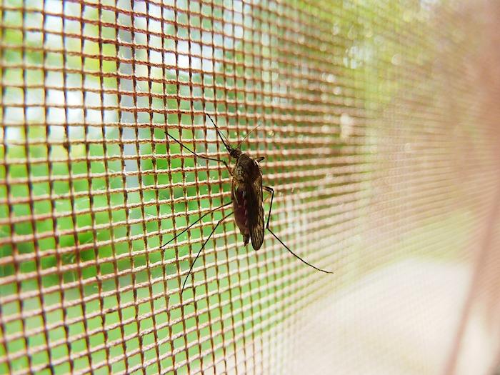 un insecte jonché sur un reseau de fenetre devant un jardin