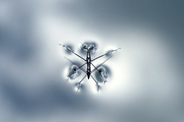un insecte moustique au fond bleu glacé image abstrait