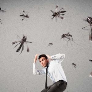 Les meilleurs conseils et astuces comment se débarrasser des moustiques - 2021