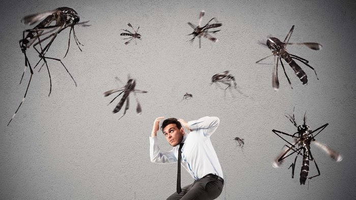 comment faire fuir les moustiques pendant la nuit et le jour sans les tuer