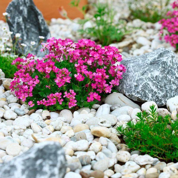 création d un parterre avec galets fleur rose vof en contraste avec les pierres blance et gris