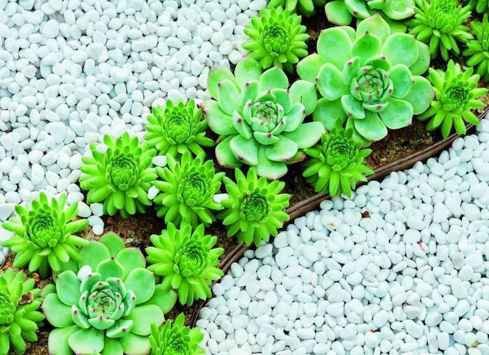 deco parterre gravier blanc des succulentes plantées dans un pot asymétrique