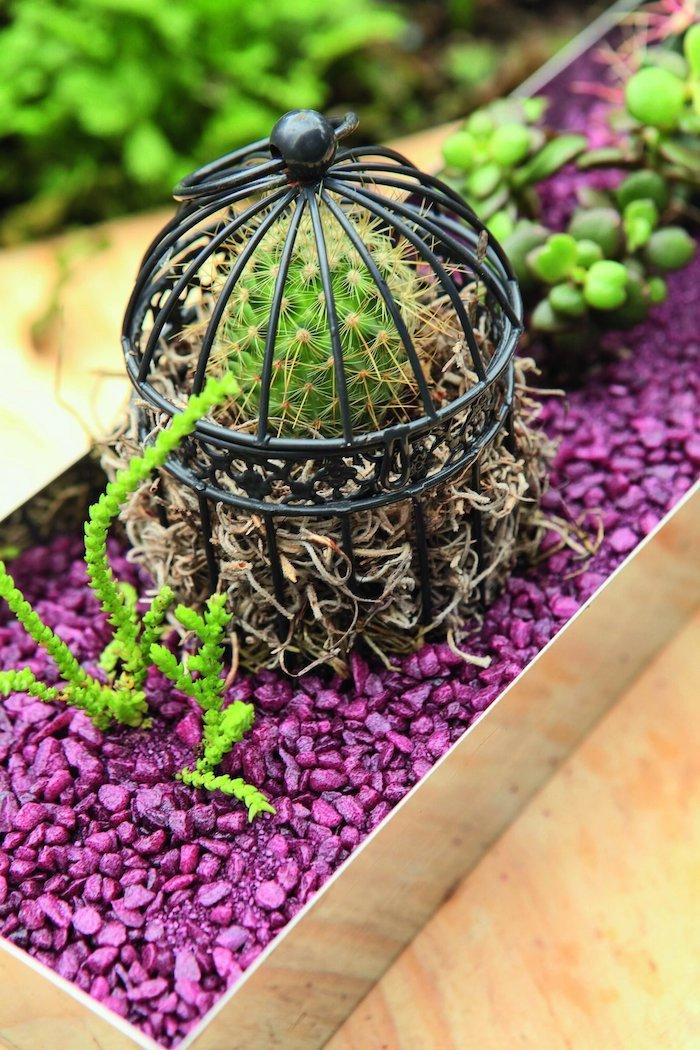 deco parterre gravier peint en mauve décorative avec une cage de cactus