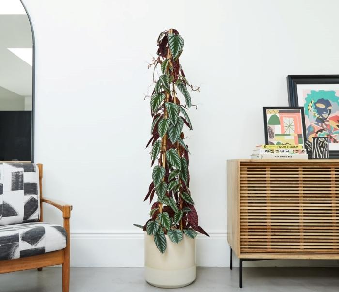 les plus belles plantes d intérieur chaise bois armoire cadre peinture collection livre miroir ovale