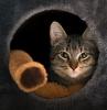 niche pour chat idée aménagement dessous d escalier original pour son animal de compagnie