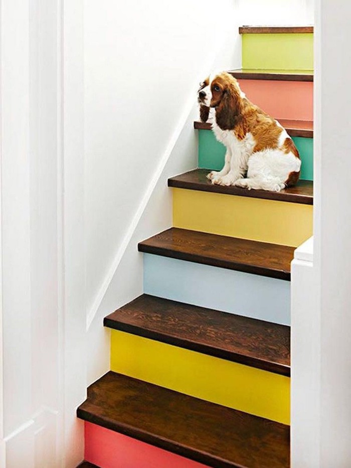 peinture pour escalier en bois contremarches en différentes couleurs murs blancs chien mignon