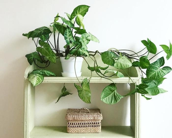 plante d intérieur tombante syngonium podophyllum panier tressé étagère meuble de rangement