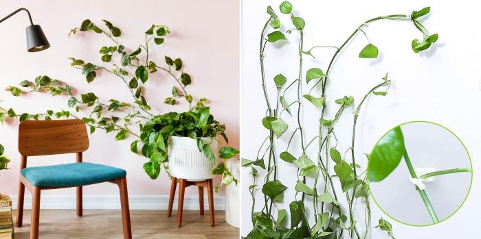 plante murale lampe sur pied noire chaise bois foncé pot fleur blanc clips muraux adhésifs